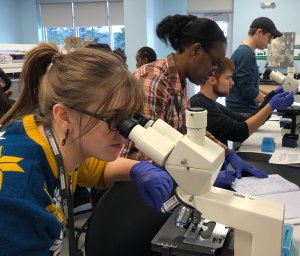 SMCC Students conduct scientific research at MDIBL
